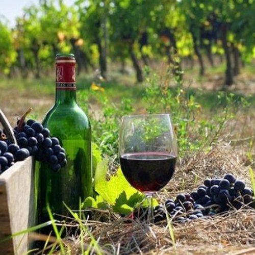 wine roads (6)